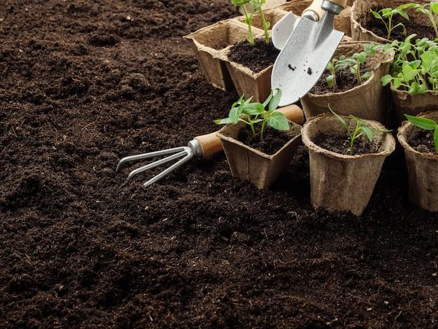 Ferramentas de jardinagem e mudas de plantas estão no chão.