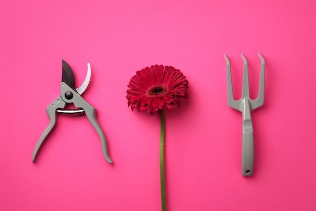 Ferramentas de jardinagem, flor em fundo pastel rosa punchy.