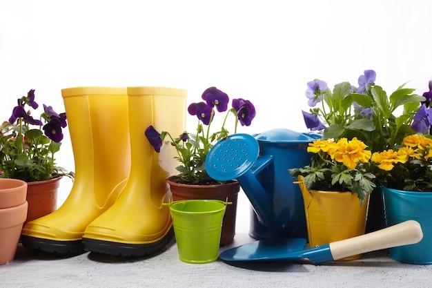 Ferramentas de jardinagem, flores e regador em branco. conceito de obras de jardim de primavera.
