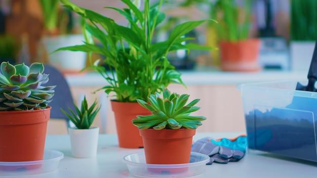 Ferramentas de jardinagem na mesa da cozinha, solo fértil com pá em vaso, vaso de cerâmica branca e plantas de floração preparadas para o plantio em casa, jardinagem da casa para decoração da casa.