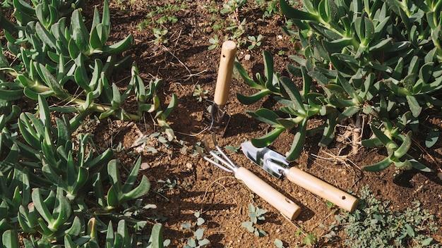 Ferramentas de jardinagem perto de plantas