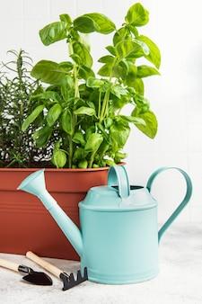 Ferramentas de jardinagem, regador e ervas, alecrim, manjericão na mesa