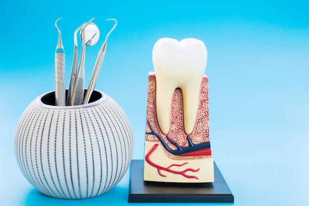 Ferramentas dentais e anatomia do dente no fundo azul.