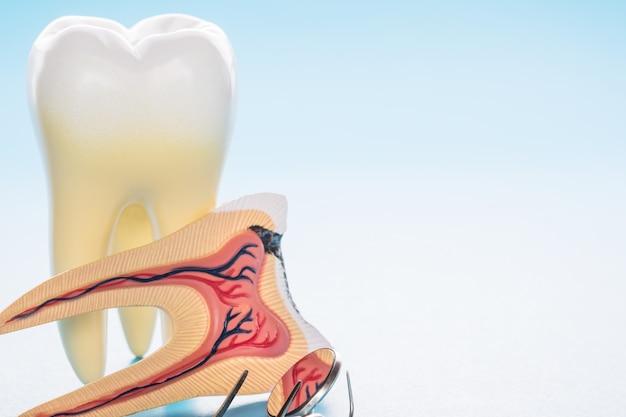 Ferramentas odontológicas e anatomia do dente em fundo azul