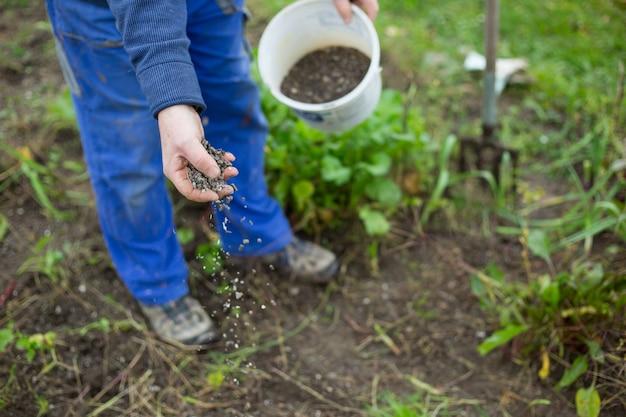 Fertilizando o jardim com fertilizante bio granular para melhores condições do jardim