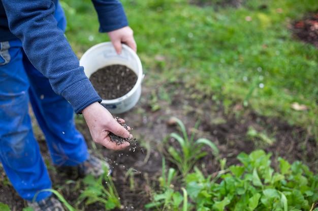 Fertilizando o jardim com fertilizante bio granular