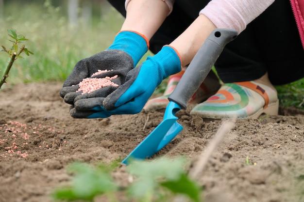 Fertilizante granulado químico mineral nas mãos da mulher
