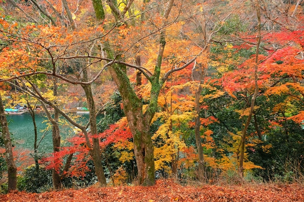 Festival da folha da árvore colorida no japão