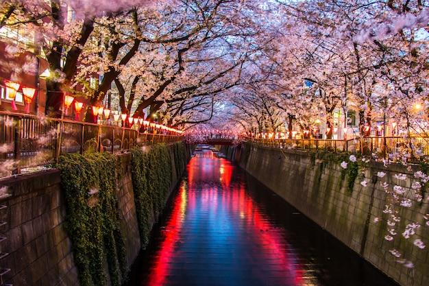 Festival de sakura