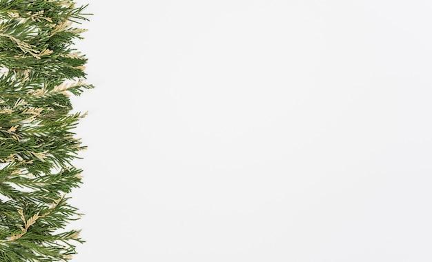 Fila, de, macio, planta, ramos