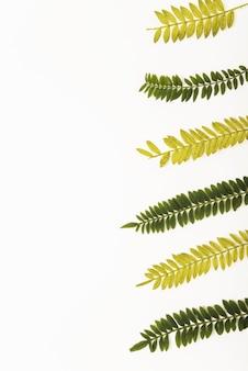 Fila de ramos de samambaia delicada