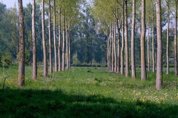 Fileira de árvores com grama verde no chão