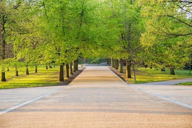 Fileira de árvores de bordo no tempo de mola com passagem pedestre.