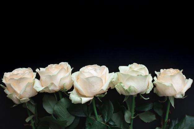 Fileira de cinco rosas brancas sobre fundo preto, vista superior. postura plana com espaçador para mensagem