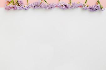 Fileira de flores roxas no fundo branco