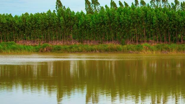 Fileiras de árvores ao lado da lagoa