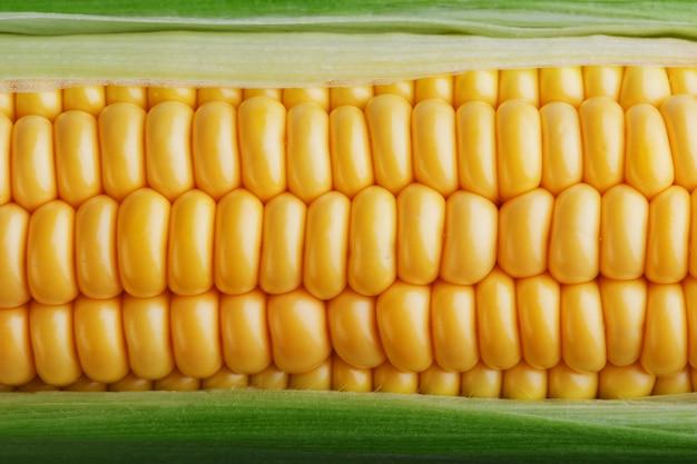 Fileiras de grãos de milho amarelos frescos e maduros