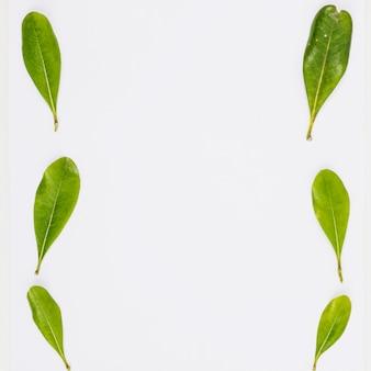 Fileiras de pequenas folhas