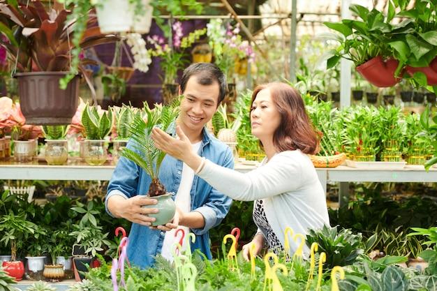 Filho adulto ajudando a mãe a escolher a planta cycas no viveiro de plantas