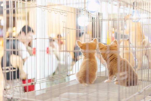 Filhote cachorro, em, um, gaiola, para, vender, em, a, animal estimação, mercado, pessoas, comprando, animais estimação, de, loja animal