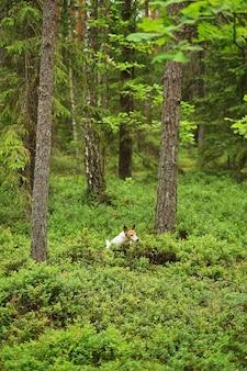 Filhote de aventura atravessa a floresta