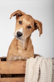 Filhote de cachorro adorável dentro de uma caixa de madeira