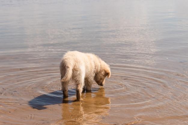 Filhote de cachorro adorável na margem da praia.