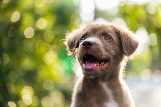 Filhote de cachorro bonito com fundo natural bokeh