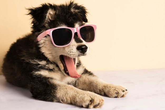 Filhote de cachorro bonito com óculos de sol bocejando