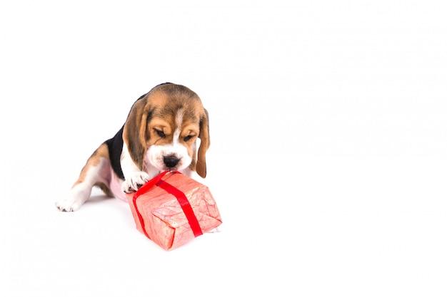 Filhote de cachorro bonito com um presente de natal em uma caixa rosa