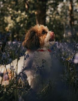 Filhote de cachorro bonito dachshund