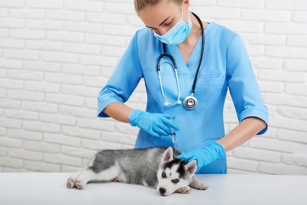 Filhote de cachorro bonito de cão husky com olhos azuis, deitado na mesa na clínica veterinária moderna, veterinário profissional fazendo injeção com pica. médica em uniforme azul, preocupando-se com cachorro com olhos azuis.