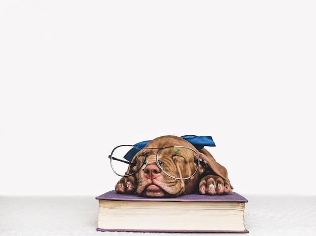 Filhote de cachorro bonito e livros antigos. de volta à escola