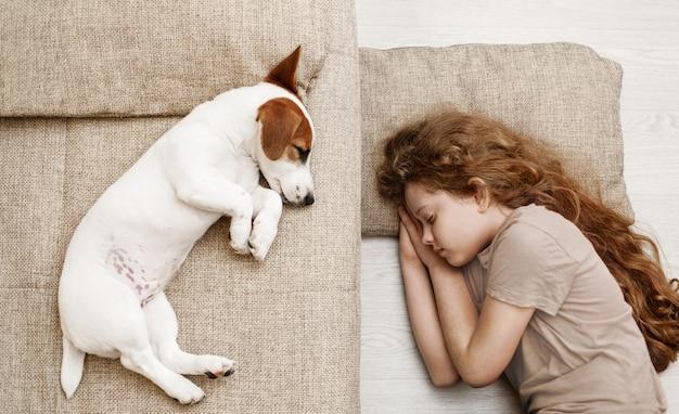 Filhote de cachorro bonito está dormindo na cama