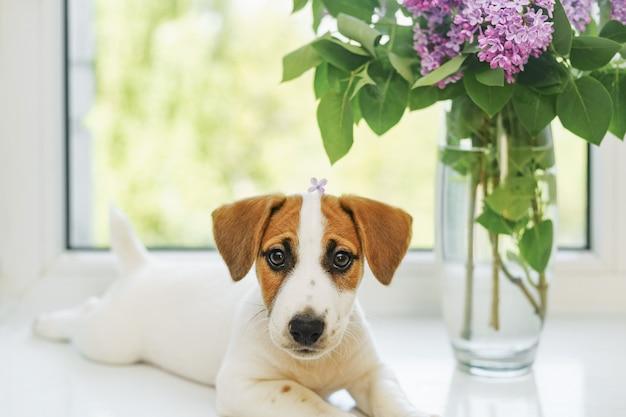 Filhote de cachorro bonito está sentado na janela