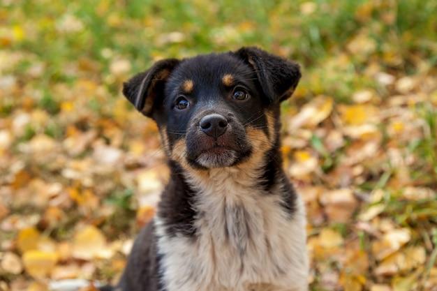 Filhote de cachorro bonito sem-teto brincando nas folhas amarelas