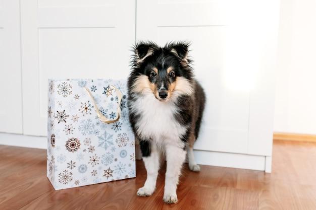 Filhote de cachorro bonito shelty com chifres de veado de natal