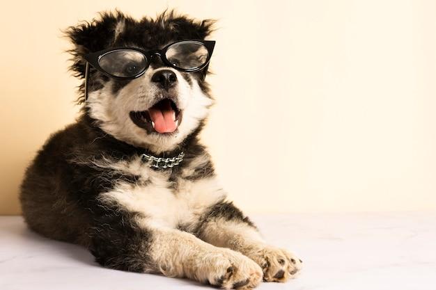 Filhote de cachorro bonito vista frontal com óculos