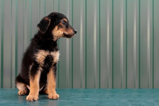 Filhote de cachorro bonito vista lateral