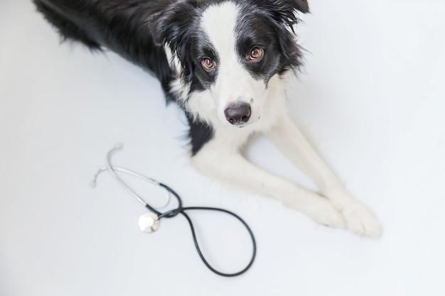 Filhote de cachorro border collie e estetoscópio isolado no branco