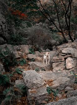 Filhote de cachorro branco na floresta. animal nas montanhas