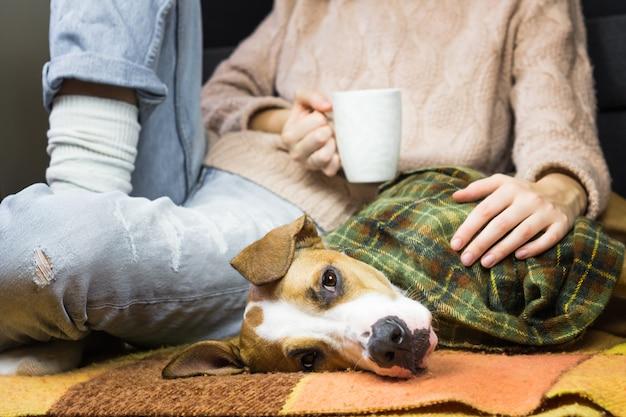 Filhote de cachorro coberto de manta relaxante com humanos