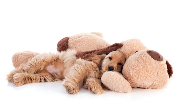 Filhote de cachorro cocker spaniel e brinquedo