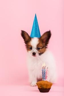 Filhote de cachorro comemorando seu aniversário