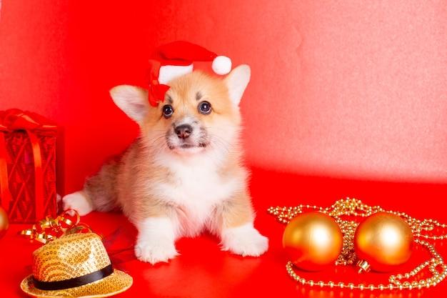 Filhote de cachorro corgi com chapéu de papai noel em fundo vermelho natal, ano novo