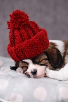 Filhote de cachorro de raça pequena papillon dormindo docemente no travesseiro