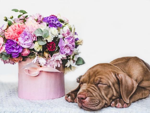 Filhote de cachorro encantador de cor marrom e flores brilhantes.