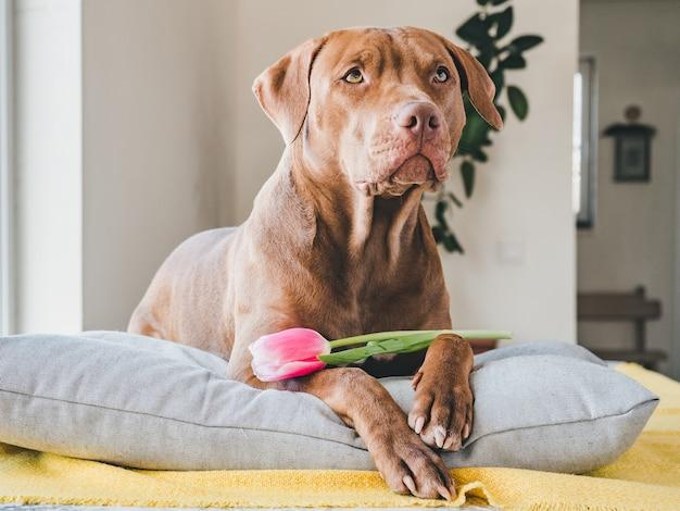 Filhote de cachorro encantador de cor marrom e tulipa brilhante.