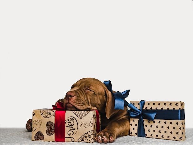 Filhote de cachorro encantador e uma caixa festiva