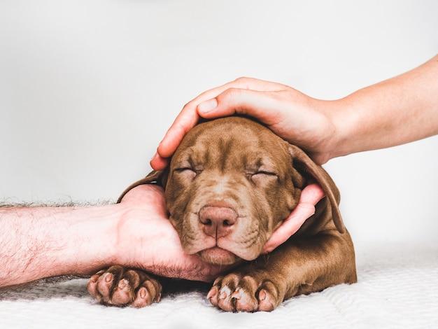 Filhote de cachorro encantador, mãos de homem e mulher